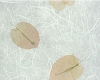 Petals & White Paper