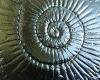 Kiln Formed Glass C #029